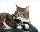 Picture of cat with sunglasses relaxing